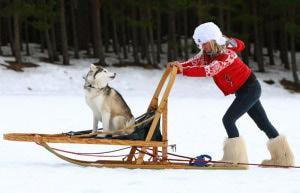 В Приамурье пройдут традиционные гонки на собачьих упряжках