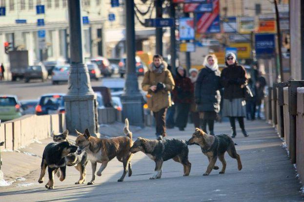 Защитники животных Приморья призывают власти гуманно отнестись к бродячим собакам