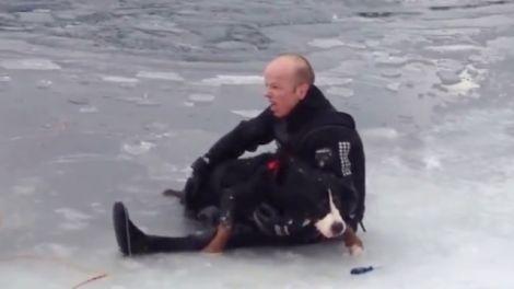 Норвежца, спасшего тонущую собаку, назвали героем