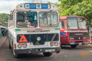 Беременные собаки Шри-Ланки будут ездить с особым комфортом